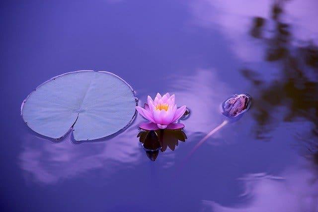 Choisir Un Zafu Le Coussin De Méditation Qui Vous Aidera à Méditer